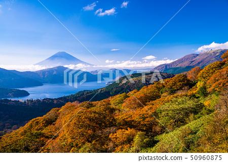 (가나가와 현) 단풍의 하코네 大観山에서 후지산 50960875