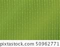 Matcha New Tea Advertising Background Polka Dots on Vertical Stripes 50962771