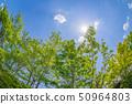 可能新鲜的绿色和蓝天全天相镜头 50964803
