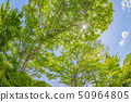 可能新鲜的绿色和蓝天全天相镜头 50964805
