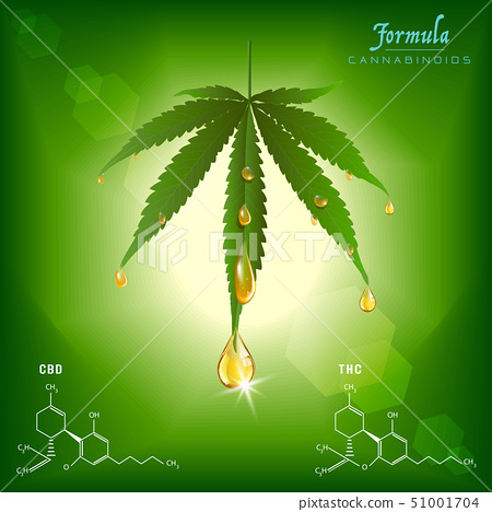 Green cannabis leaf drug marijuana herb Background 51001704