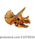 Triceratops,Dinosaur skull model is made of 51079030