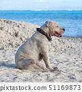 dog resting near the ocean 51169873