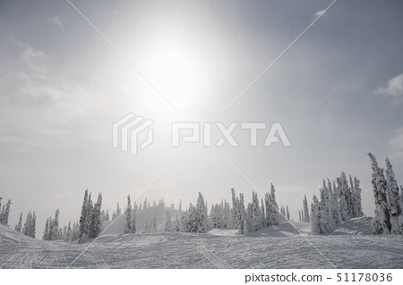 Snowy alps with snow covered trees on a sunny day 51178036