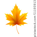 Autumn yellow maple leaf leaves. Vector illustration 51193913