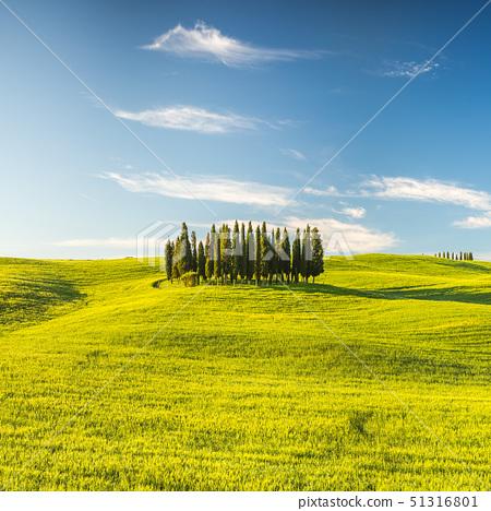 Tuscany at spring 51316801