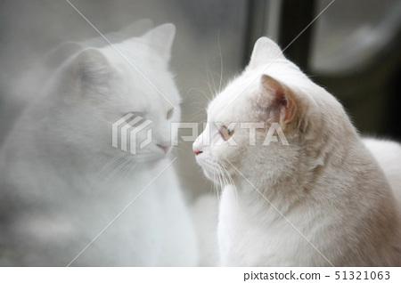반영,머리,애완동물 51321063