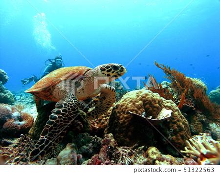 다이버,산호,인도네시아 51322563