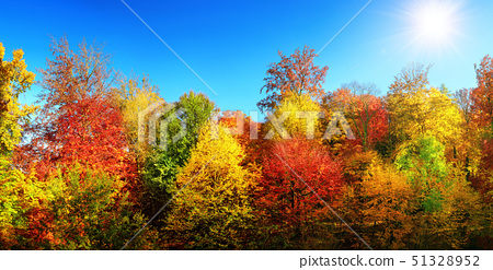colorful autumn trees in the sun and bright blue sky 51328952