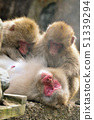Hairy monkey in parent and child 51339294