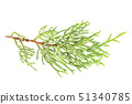 A photo of a green thuja branch on a white background 51340785