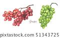 Set of red and green grapes. Watercolor. 51343725