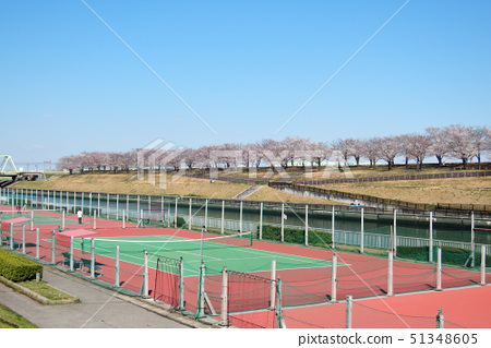 벚꽃길과 테니스 코트 51348605