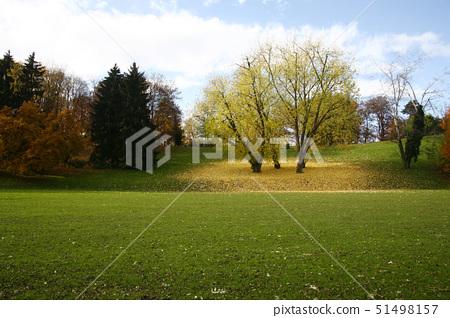 Baum im Herbst,Zurich,Switzerland 51498157