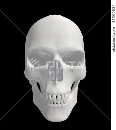 Skull 51509639