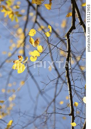 나뭇잎 51512908