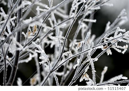 눈꽃,춘천시,강원도 51515407