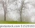 USA,California,Bullion Mountain,Mount Bullion,Oak Trees in FogRain,view from car 51520163