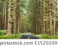 USA,Washington State,Hoh River Road,Hoh River Rainforest,Olympic National Park 51520200