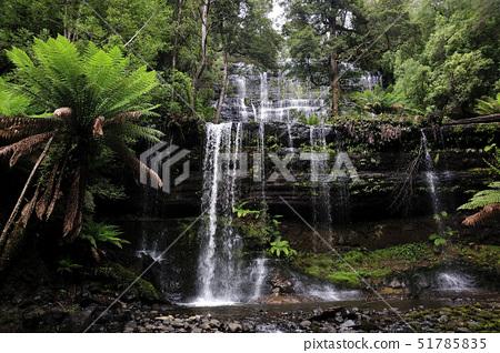 러셀폭포,열대우림,타즈마니아,호주 51785835