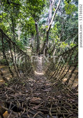 Hand made vine bridge in the Dzanga-Sangha Park, UNESCO World Heritage Site, Central African Republi 51786082