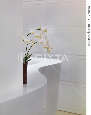 Orchids on white curved countertop,Taipei, Taiwan 51790481