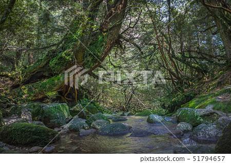 시라타니운수계곡,야쿠시마,가고시마현,일본 51794657