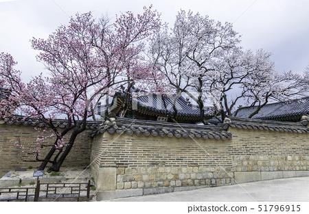 홍매화,희우루,성정각,창덕궁,종로구,서울 51796915