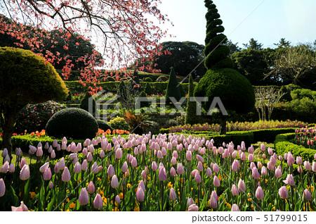 튤립,외도,보타니아,한려해상국립공원,거제시,경남 51799015