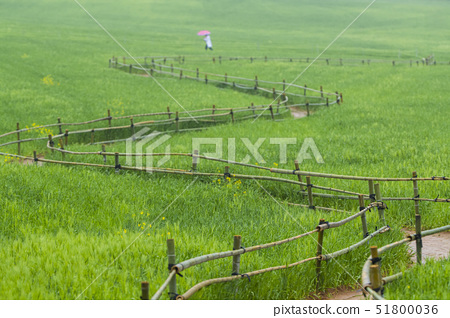 산책로,청보리밭,학원농장,고창군,전북 51800036