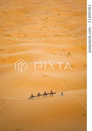 Tourists on a camel ride in Erg Chebbi Desert, Sahara Desert near Merzouga, Morocco, North Africa, A 51800461