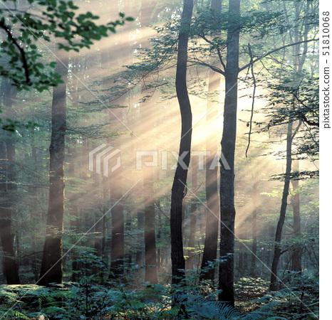 France,Allier,forest of Tronais, 51810068