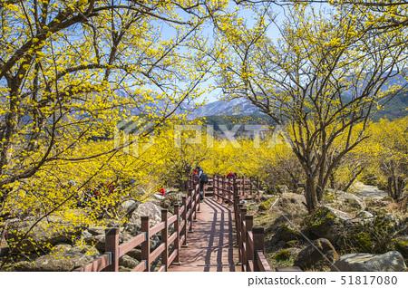 산책로,산수유,산동,구례군,전남 51817080