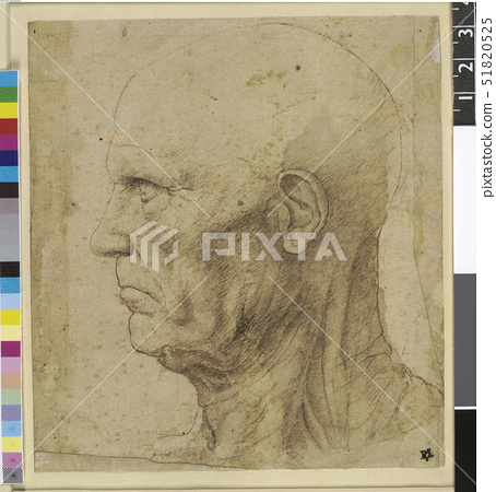 The head and neck of an elderly man in profile to left,after Leonardo da Vinci 51820525