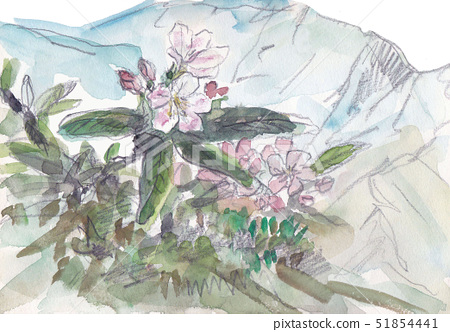 A rhododendron that blooms on the summit of Arasawa Takeyama 51854441