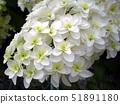 豪猪花朵 51891180
