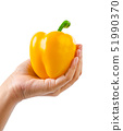 Hand holding ripe yellow bell pepper. 51990370