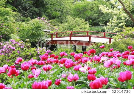 สวนดอกโบตั๋น Tsukuba เมือง Tsukuba จังหวัดอิบารากิ 52914736