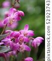 Gingianam flowers 52923743