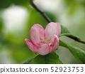 ดอกไม้ของ Karin 52923753