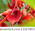 ดอกไม้อเมริกันของ Deigo 52923863