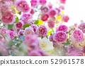 Rose rose garden rose garden 52961578