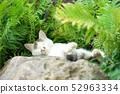 고양이 휴식 52963334