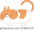 猫茶白老虎 52966133
