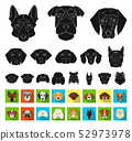 Dog breeds black,flat icons in set collection for design.Muzzle of a dog vector symbol stock web 52973978