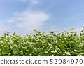꽃 피는 메밀 밭 52984970