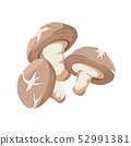 Shiitake Mushroom vector illustration 52991381