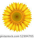 Realistic beautiful bright yellow sunflower blossom isolated 52994765