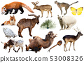 asia animals isolated 53008326