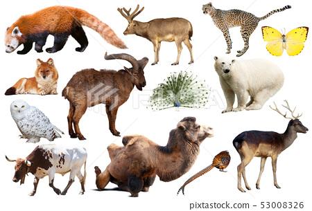 asia animals isolated 53008326